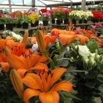 Como montar uma loja de floricultura