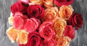 floricultura online